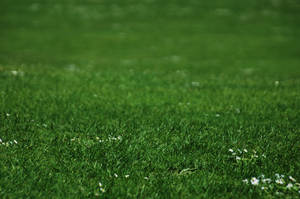 elements.grass by tom2strobl