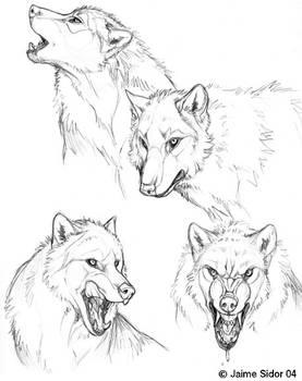 Dyre Loup Sketches