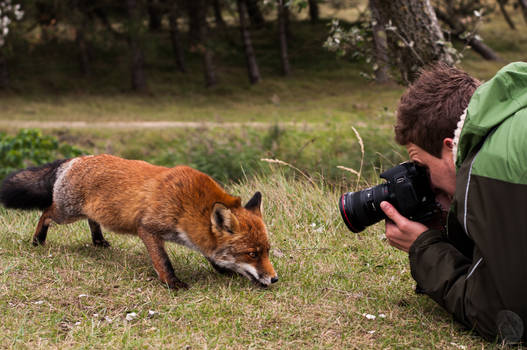 Foxes 8