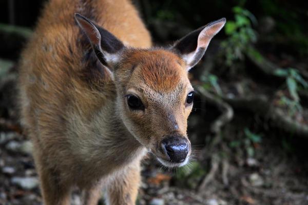 cutie deer :3