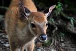 cutie deer :3 by IsakiYukihara