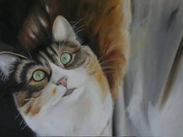 cat2 by shizuka10