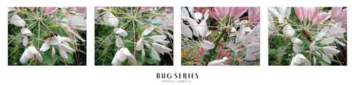 Bug Series by siostra-rana