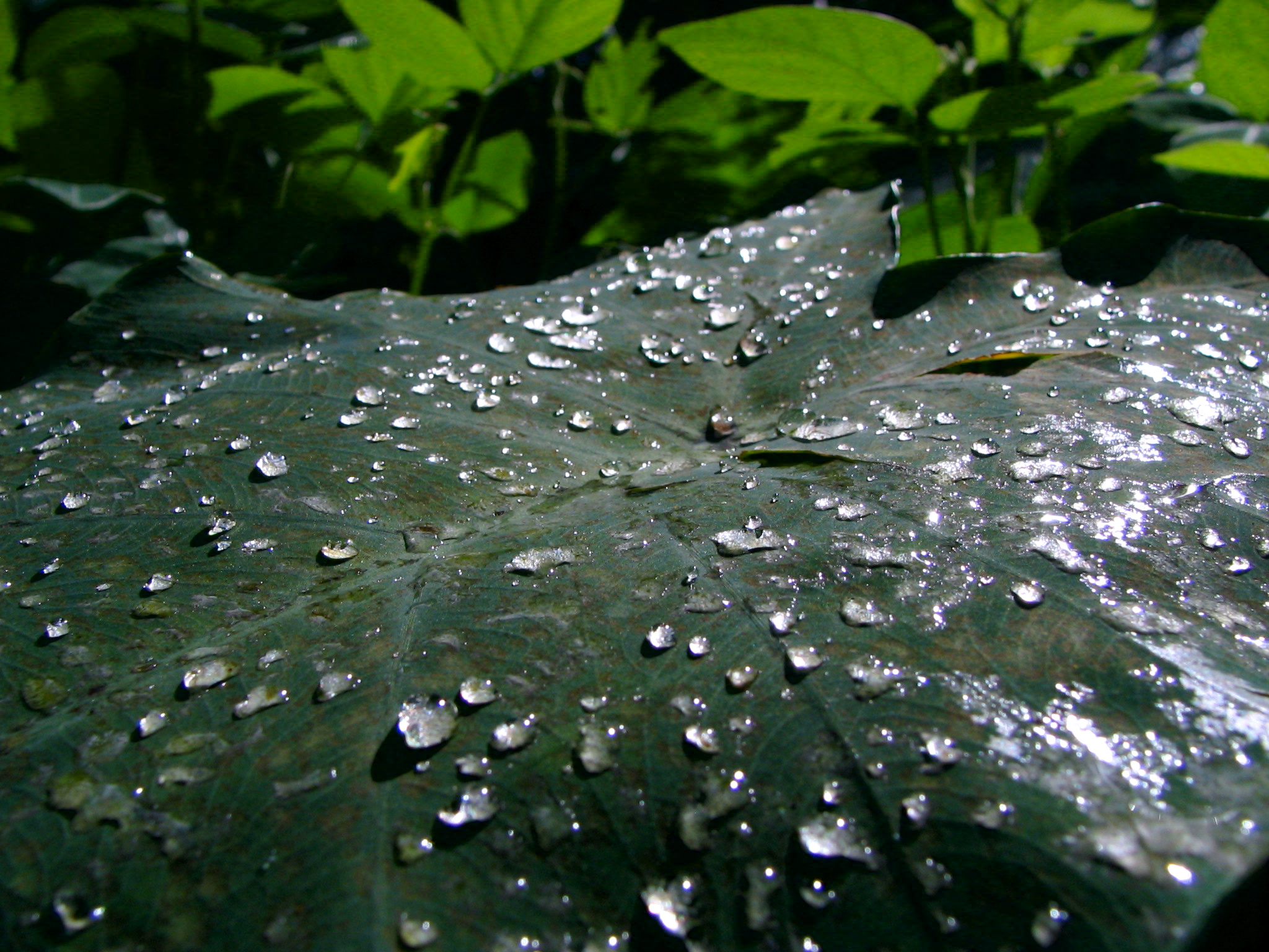 Droplets by siostra-rana