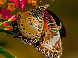 Butterfly on Croka by MichelLalonde