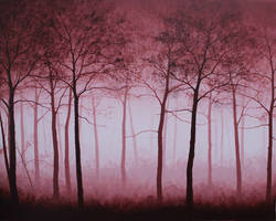 The reds by VenskeArts