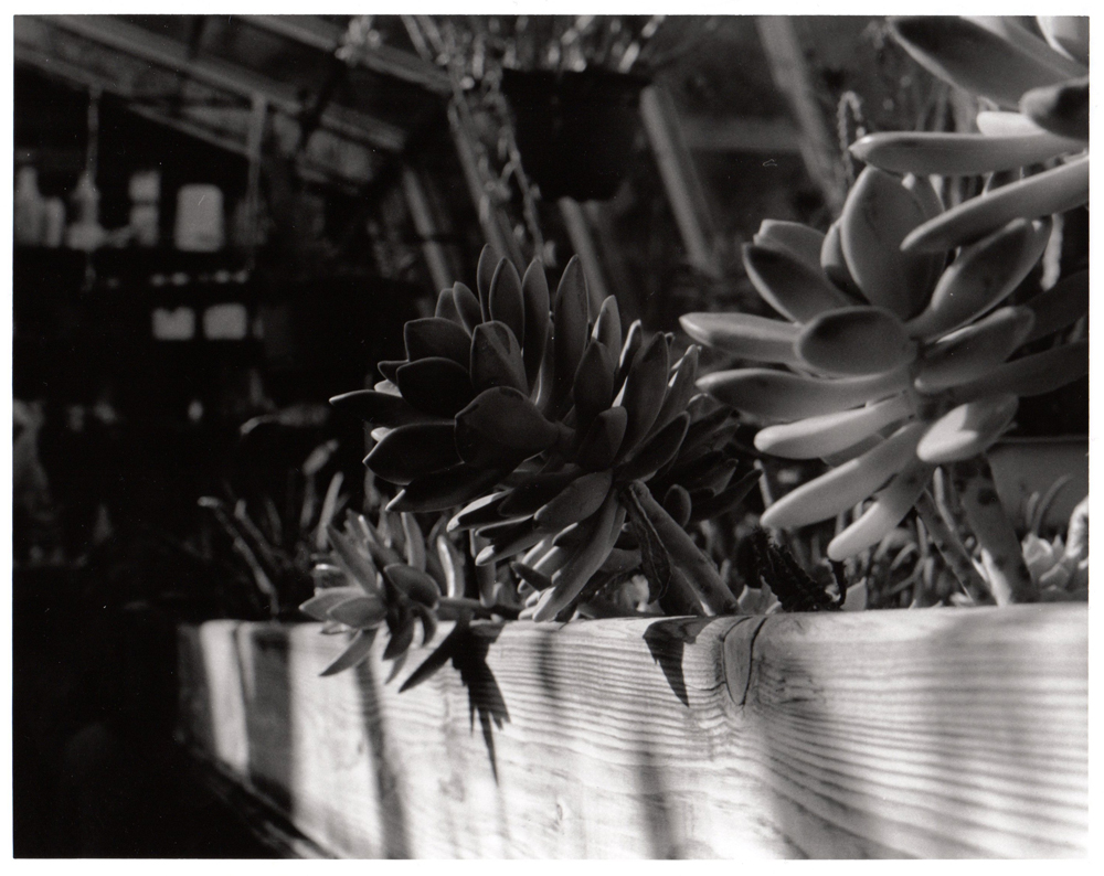Depth of Field - Greenhouse by artisticTaurean