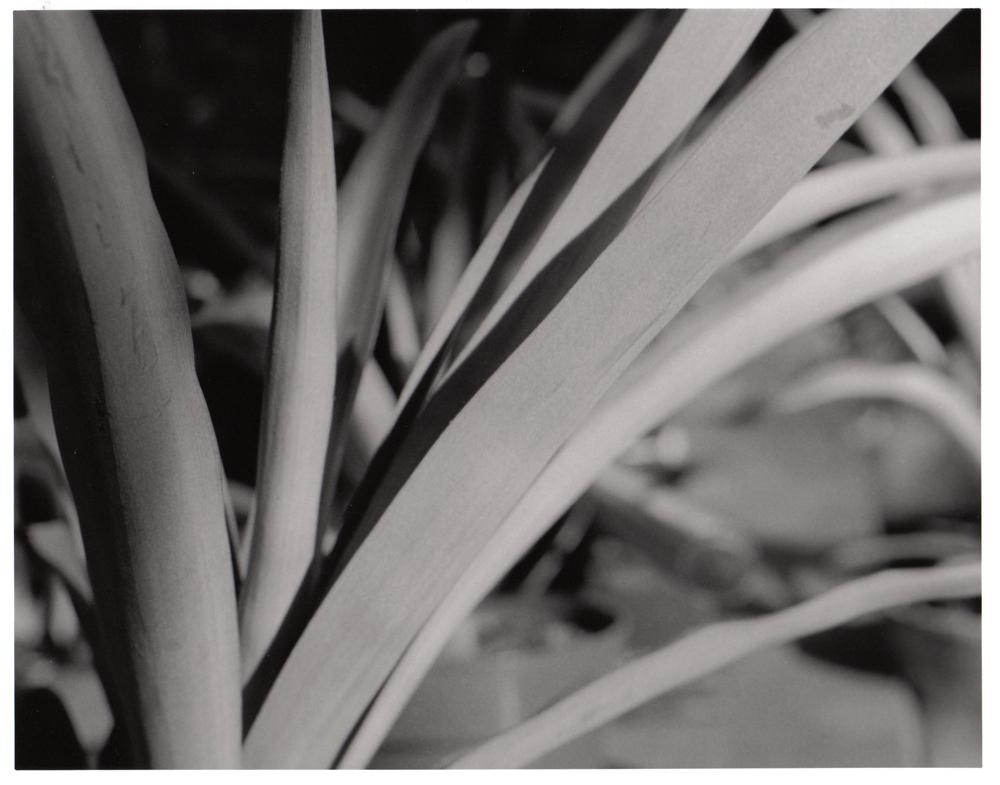 Depth of Field 02 by artisticTaurean