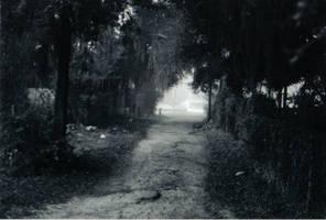 Lost in the Fog -4 by Robb-Wayward