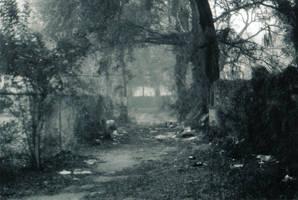 Lost in the Fog -7 by Robb-Wayward