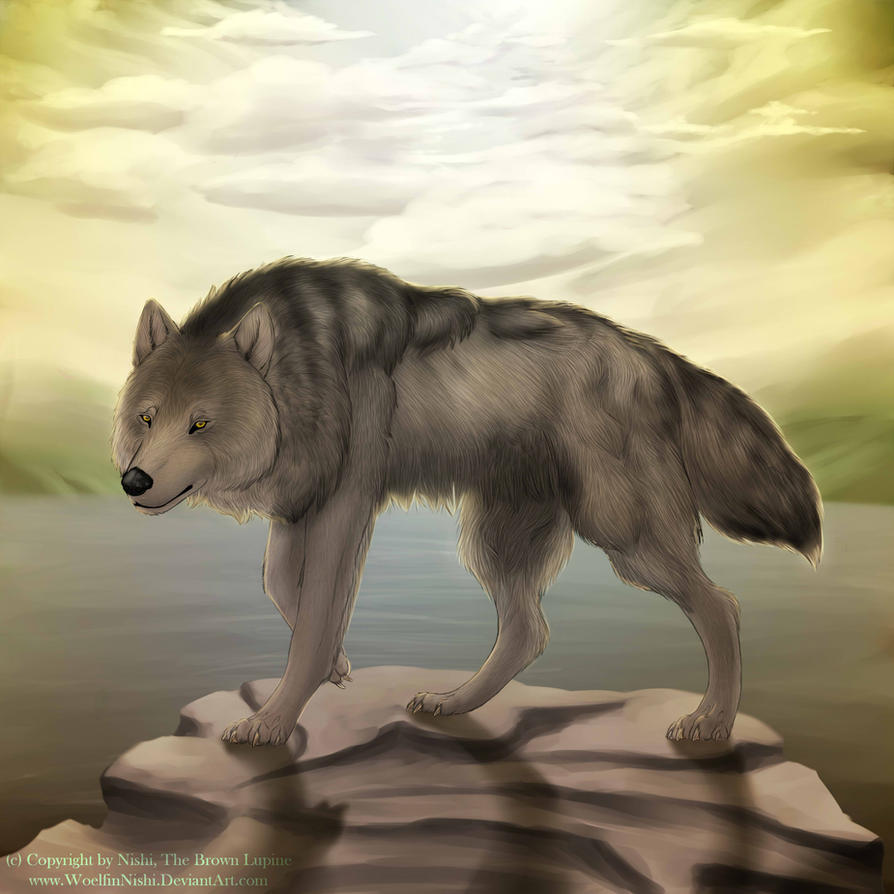 wolf island chat When a female wolf arrives on the island's rocky  wolf island is an absolutely gorgeous book with amazing photographs and text explaining the life of a wolf in .