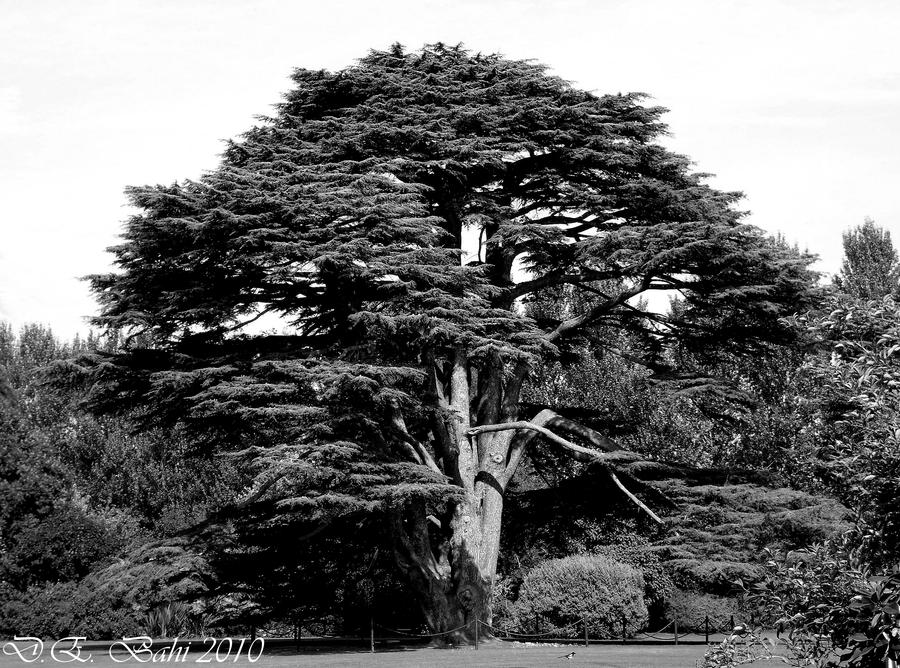 Tree by debahi