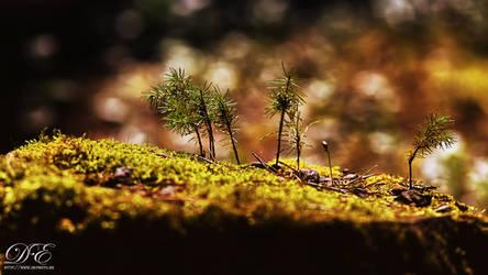 Newborns in moss