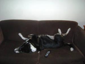 Jaffa doggie