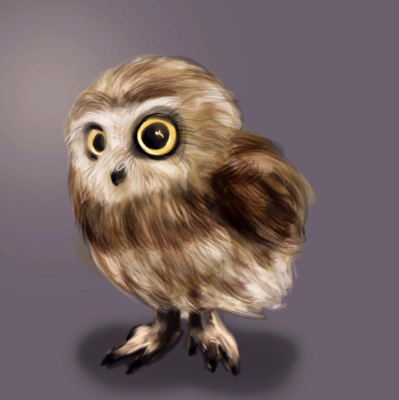 Little owl by Kruczkowska