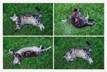 kitty cat shapes