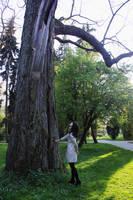 big old oak by Laplum