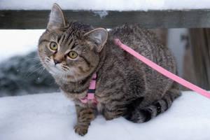 Cold Kitten by MikiYoshiUzuki