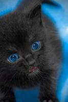 Blue Marshmallow by MikiYoshiUzuki