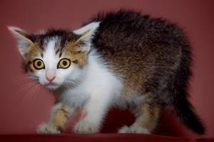 Scared Kitten by MikiYoshiUzuki