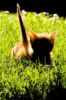Shadowcat by MikiYoshiUzuki