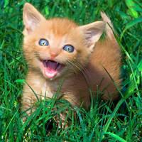 Happy Cat by MikiYoshiUzuki