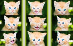 Kitty Kollage Wallpaper by MikiYoshiUzuki
