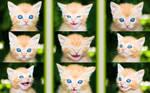 Kitty Kollage Wallpaper