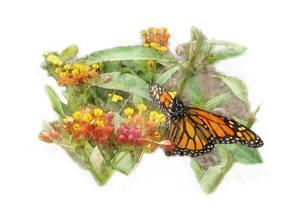 Artist Megan Nicole ~ Butterfly in Garden