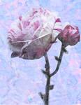 Roses for Mum