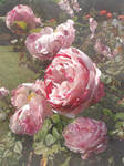 Artist Megan Nicole ~ Rose Garden