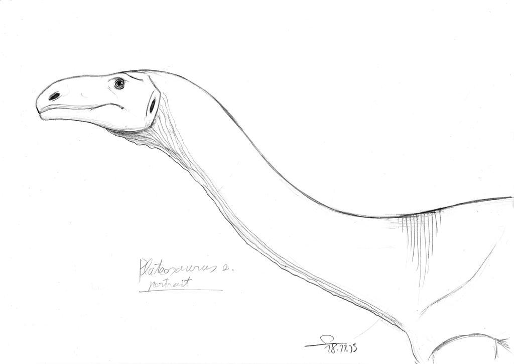 Plateosaurus sketch portrait by ShinRedDear