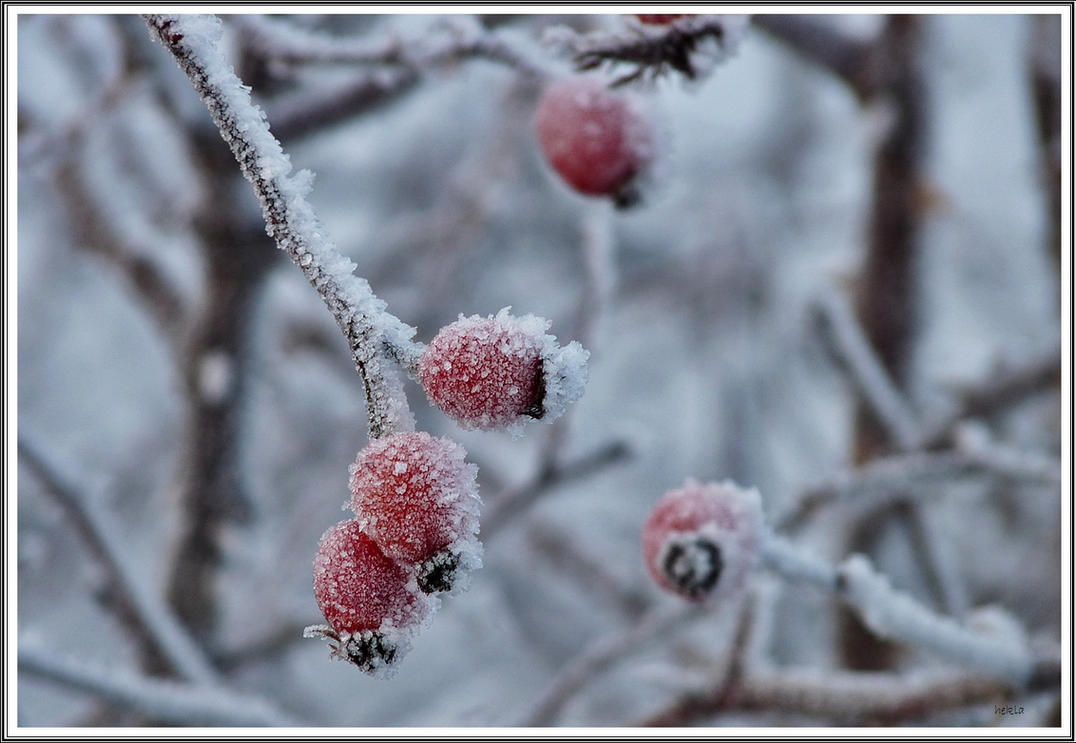 frozen hips by hekla01