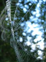 Delicate Dew by breannemarie