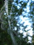 Delicate Dew