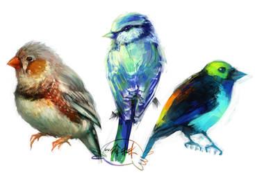 Aves by forgottenpantaloons