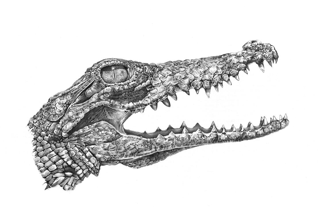 Crocodile by clayjames on DeviantArt