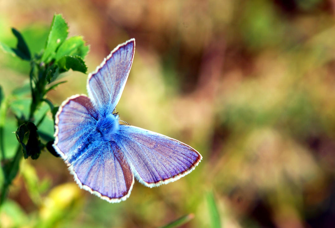 Butterfly by HaranBanjo