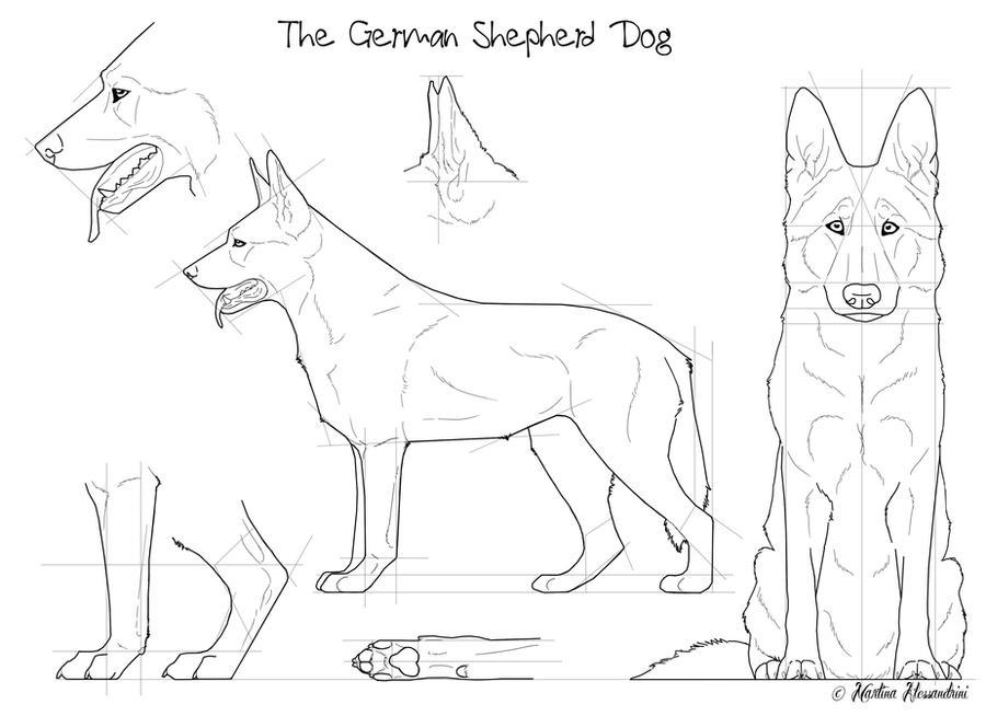 The German Shepherd Dog by Maranez on DeviantArt