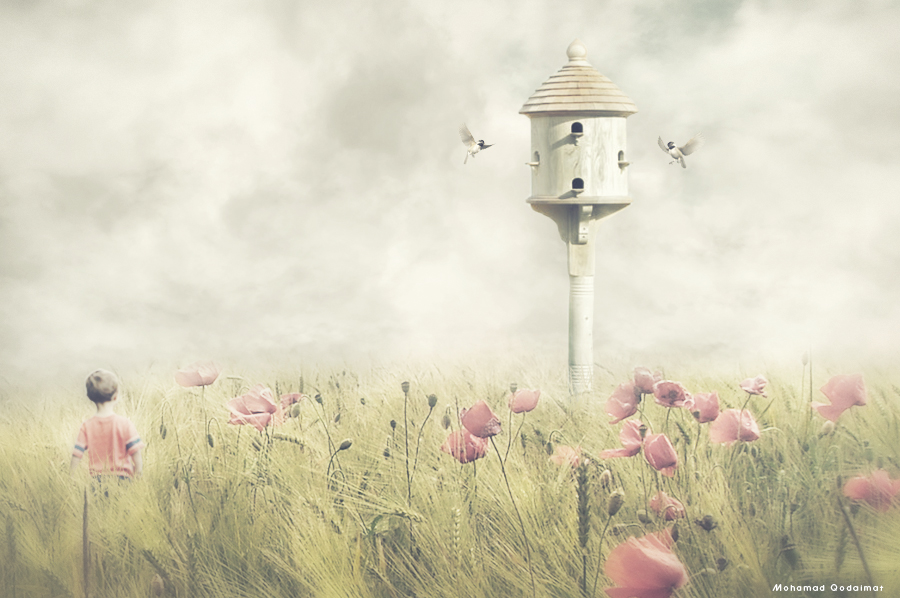 home for birds by QdMohamad
