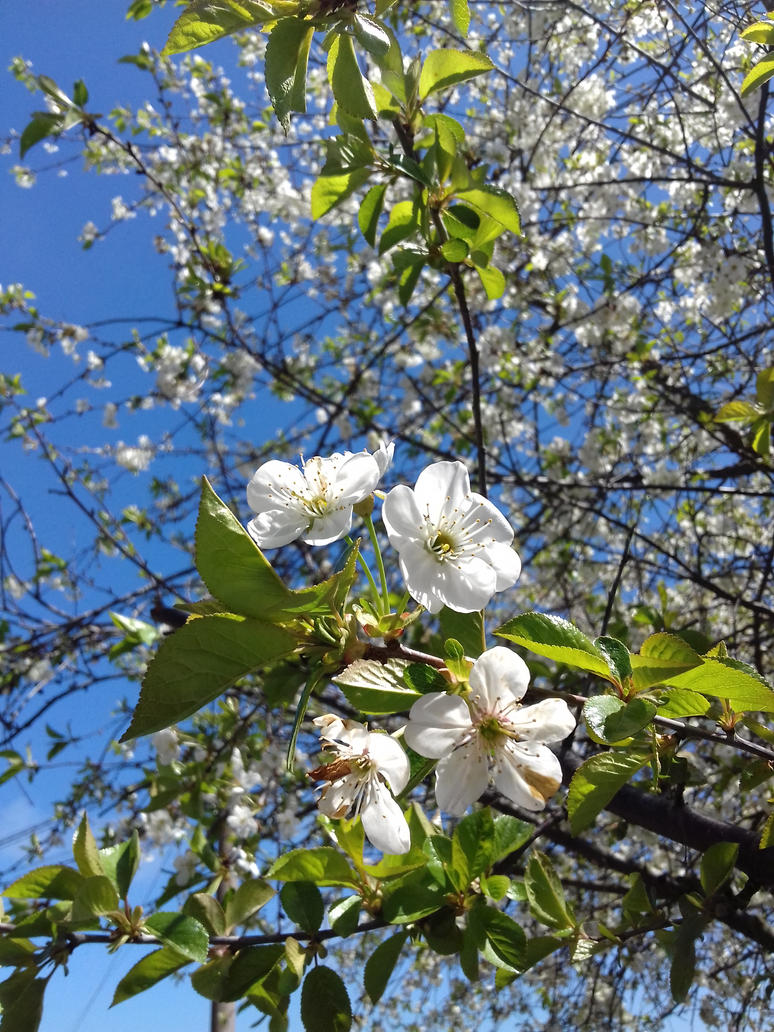 Spring flowers (#7) by addax12345