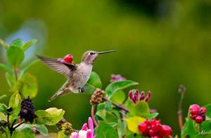 October Hummingbird