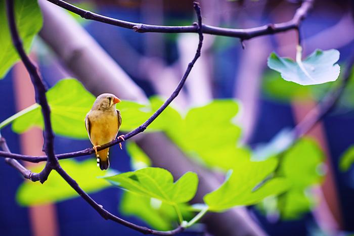 Yellow Bird by Aixchel