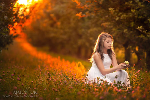 Sunset Orchard
