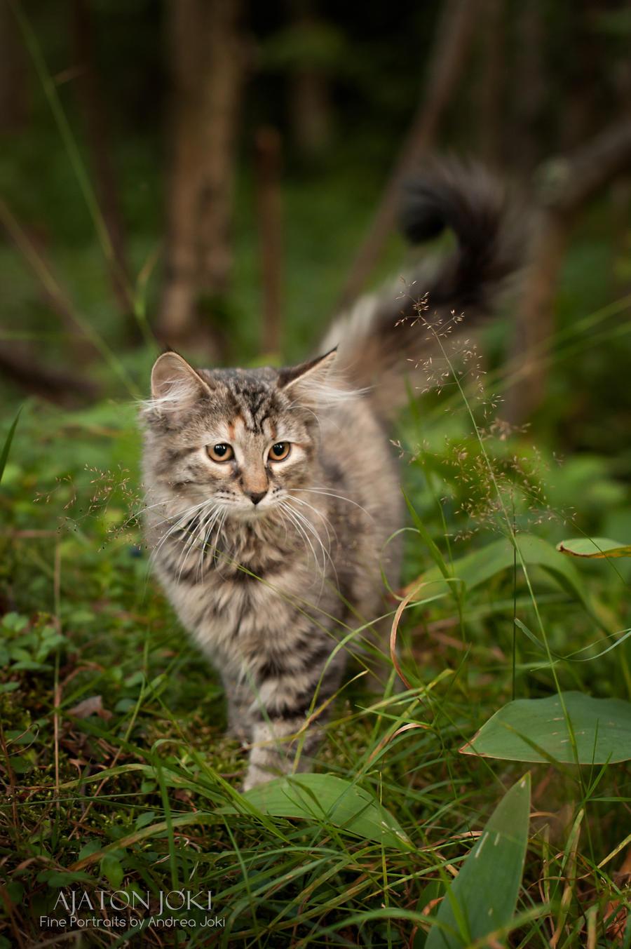 Norwegian Forest Cat 1 By Aixchel On Deviantart