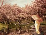Cherry Blossom by fabilua
