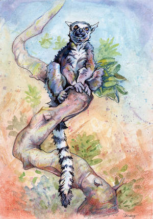 Ring-tailed Lemur study by BananazGorilla
