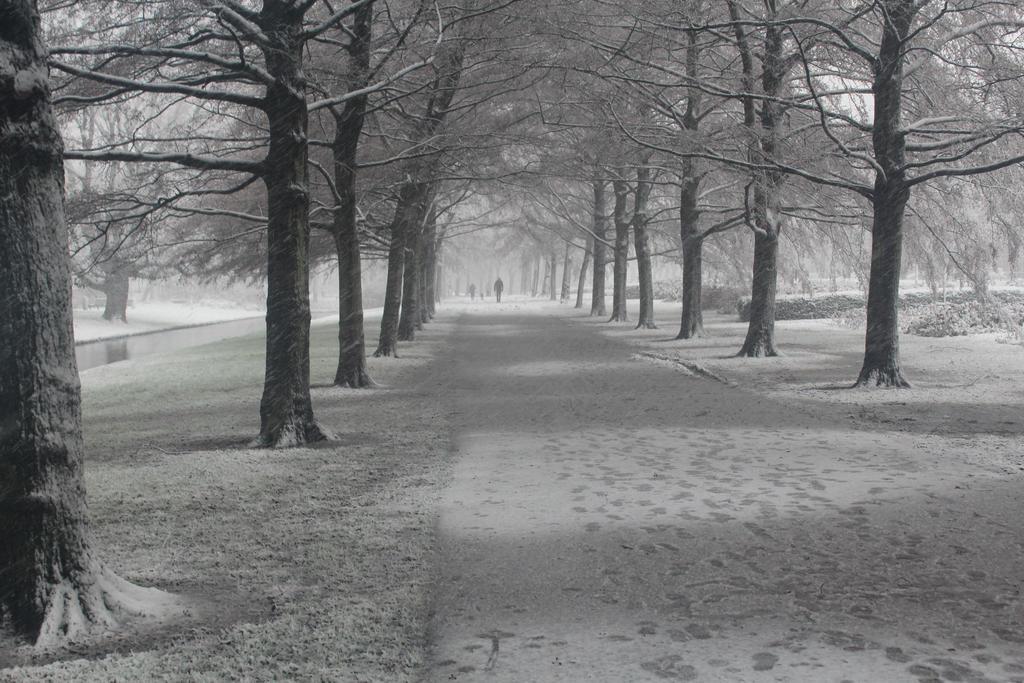 Snowy journey by Livia-Anna
