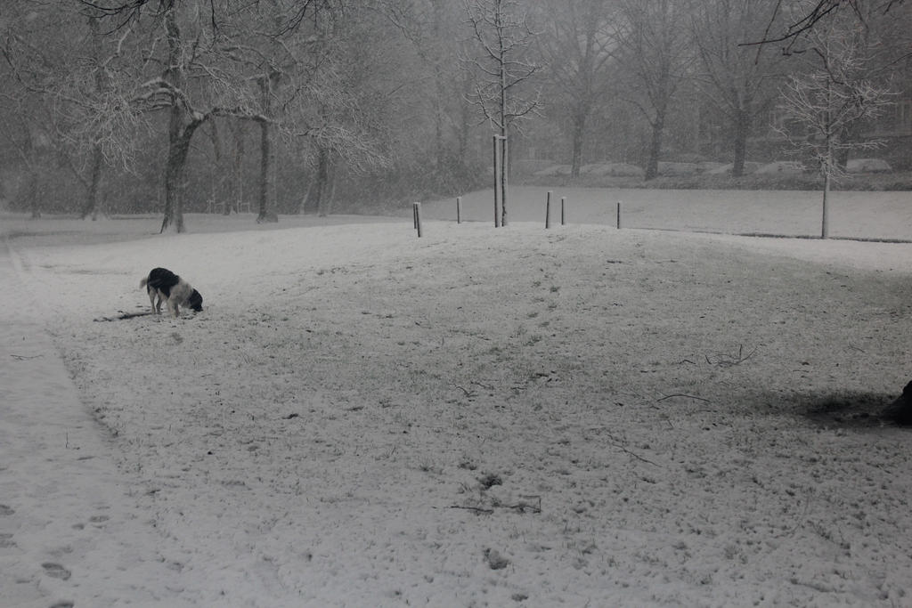 Winter scene by Livia-Anna