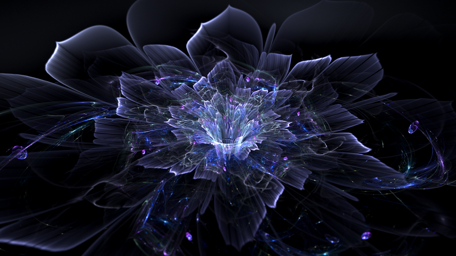 midnight flower - 3D and CG & Abstract Background Wallpapers on ...